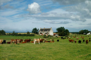 Scottish_Farm_154-602